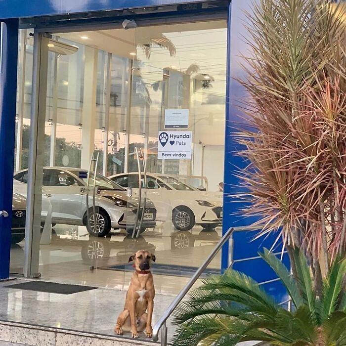 Tucosn Prime - il cucciolo assunto da Hyundai