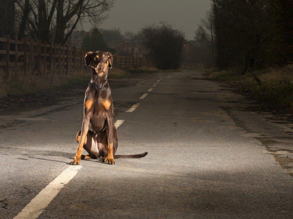 Animale investito con l'auto: cosa fare in caso di sinistro