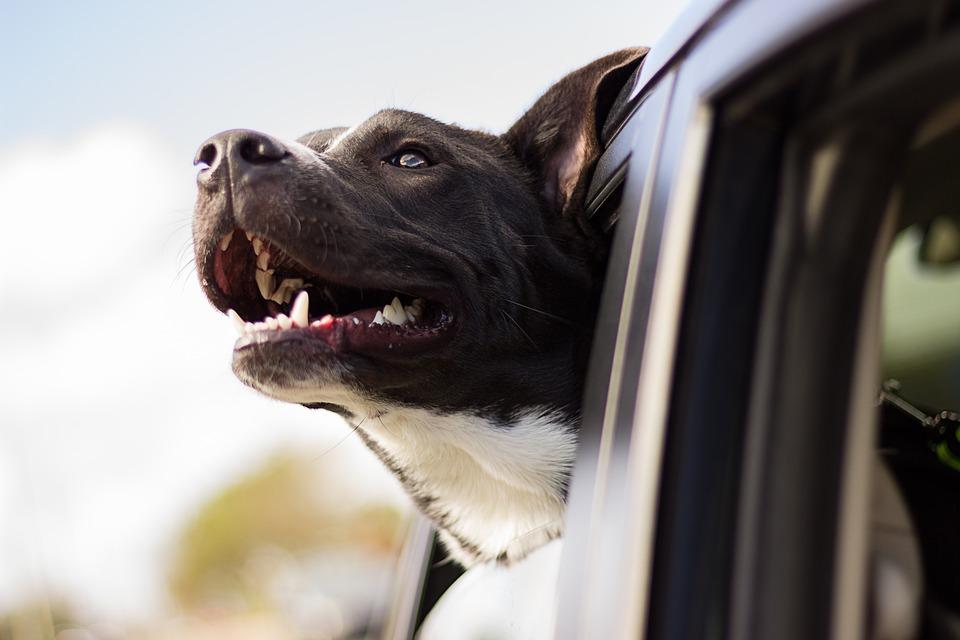 Animali in auto: come pulire ed eliminare i peli