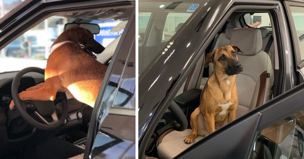 Tucson Prime - il cucciolo assunto da Hyundai
